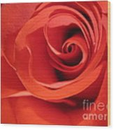 Abstract Orange Rose 9 Wood Print