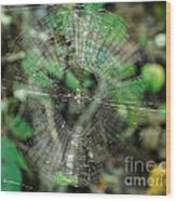 Abstract Spider Web Wood Print