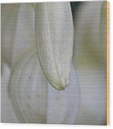 Abstract Yucca Blossom Wood Print