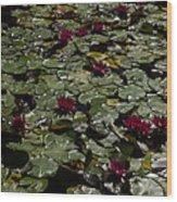 Abundance In Crimson  Wood Print