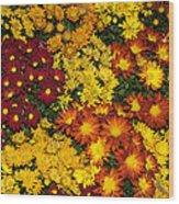 Abundance Of Yellows Reds And Oranges Wood Print