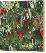 Abundant Cherries Wood Print