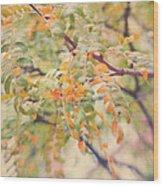 Acacia In Warm Colors Wood Print