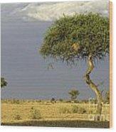 Acacia Trees On Serengeti Wood Print