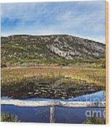 Acadia  Autumn Wood Print