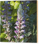 Acanthus Flower Wood Print
