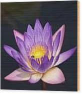 Accents On A Purple Waterlily... Wood Print