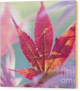 Acer Beautiful Fall Wood Print
