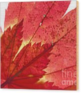 Acer From Beneath Wood Print
