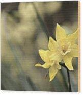 Acid Washed Daffodils Wood Print