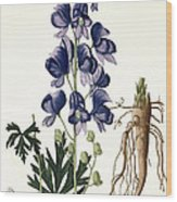 Aconitum Napellus Wood Print by LFJ Hoquart