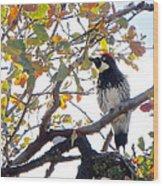 Acorn Woodpecker In Tree  In Park Sierra-ca Wood Print