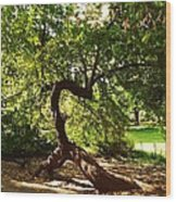 Acrobatic Tree Wood Print