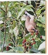 Acrobird Wood Print
