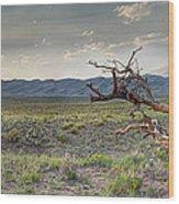 Across A Great Wilderness Wood Print