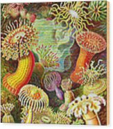 Actinia Sea Creatures Wood Print