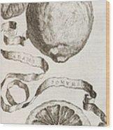 Adam's Apple Wood Print by Cornelis Bloemaert