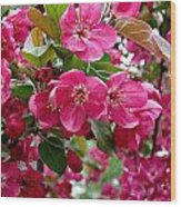 Adams Crabapple Blossoms Wood Print