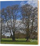 Adare Manor Grounds Wood Print