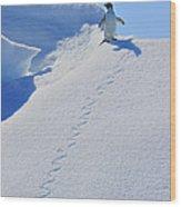 Adelie Penguin On Bergie Bit Wood Print