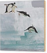 Adelie Penguins Diving Off Iceberg Wood Print
