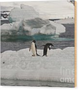 Adelie Penguins On Ice Wood Print