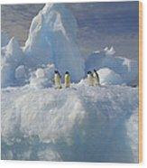 Adelie Penguins On Iceberg Antarctica Wood Print