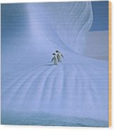 Adelie Penguins On Iceberg Antarctica Wood Print
