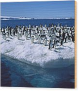 Adelie Penguins On Icefloe Antarctica Wood Print by Colin Monteath