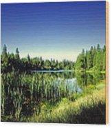 Admiring The Beauty At Woodbridge Lake Wood Print