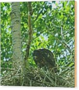 Adolescent Eagle Eating A Fish Wood Print