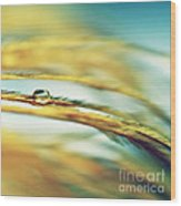 Adopt The Pace Of Nature- Feather Photograph Wood Print