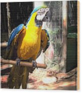 Adopted Macaw - Rescued Parrot Wood Print