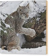 Adorable Baby Lynx In A Snowy Forest Wood Print