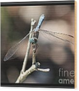 Adorable Dragonfly With Border Wood Print