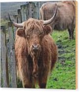 Adorable Highland Cow Wood Print