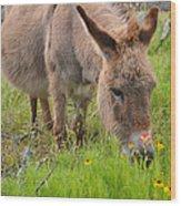 Adorable Mini-burro Wood Print