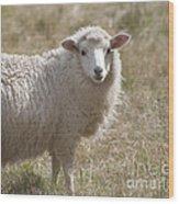 Adorable Sheep Wood Print