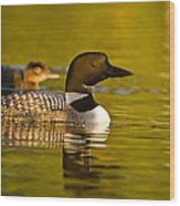 Adult And Chick Loon Pictures 2  Wood Print