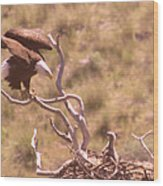 Adult Eagle With Eaglet  Wood Print