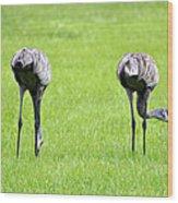 Adult Florida Sandhill Cranes Grus Canadensis Pratensis I Usa Wood Print