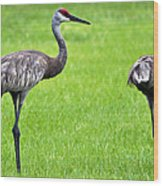 Adult Florida Sandhill Cranes Grus Canadensis Pratensis II Usa Wood Print