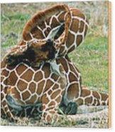 Adult Reticulated Giraffe Wood Print
