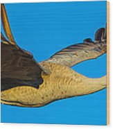 Adult Sandhill Crane Wood Print