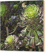 Aeonium Glow Wood Print