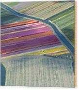 Aerial View Of Flower Fields In Spring Wood Print