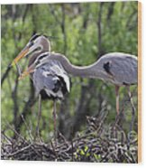 Affectionate Great Blue Heron Mates Wood Print