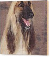 Afghan Hound Dog, Portrait Wood Print