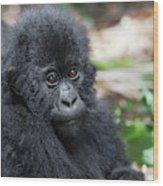 Africa, Rwanda, Volcanoes National Park Wood Print