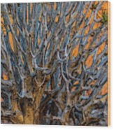 Africa, South Africa, Richtersveld Wood Print